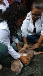 Medicina Veterinária: cavalo, cães, gato e até mini boi no hall da Universo-Campos 1