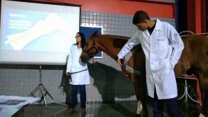 Medicina Veterinária: cavalo, cães, gato e até mini boi no hall da Universo-Campos 2