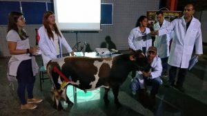 Medicina Veterinária: cavalo, cães, gato e até mini boi no hall da Universo-Campos 6